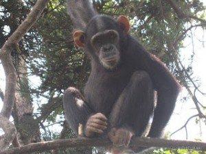 Maniema : Reprise des activités de la chasse après trois mois de fermeture.  dans Actualités IMG_2335-300x225